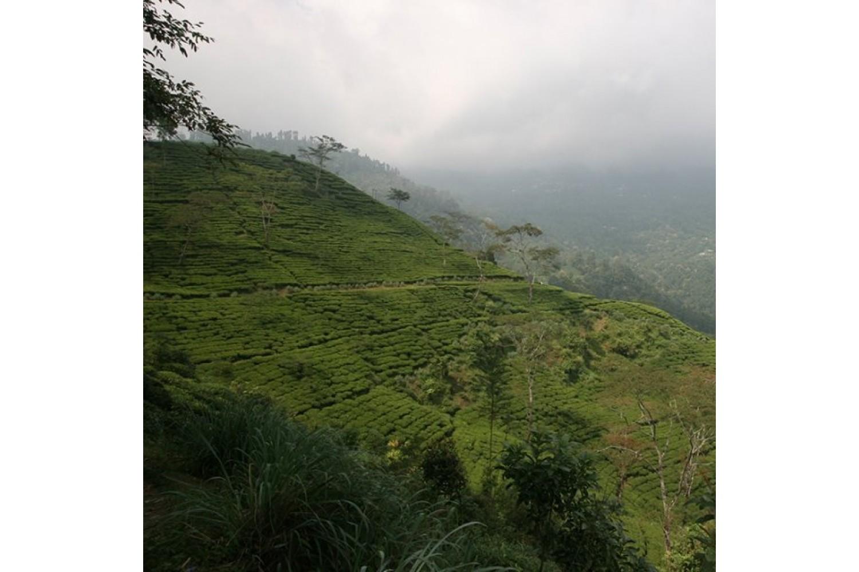 Thé noir Bio Darjeeling 50 g